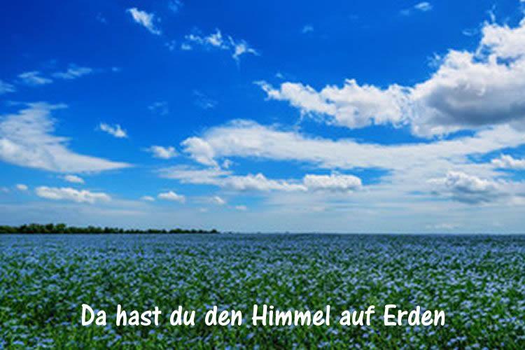 flachsbluetenlandschaft-himmel-auf-erden-beecker-erlebnismuseen-Da hast du den Himmel auf Erden